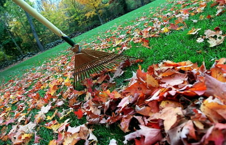 raking_leaves3