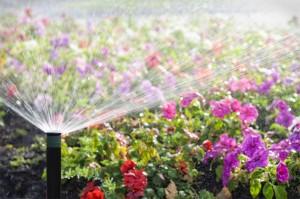 res-irrigation08