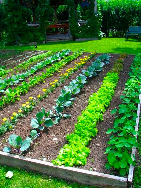 source - Vegetable Garden Ideas For Spring