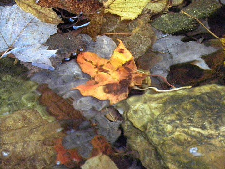 leaf peeping 1