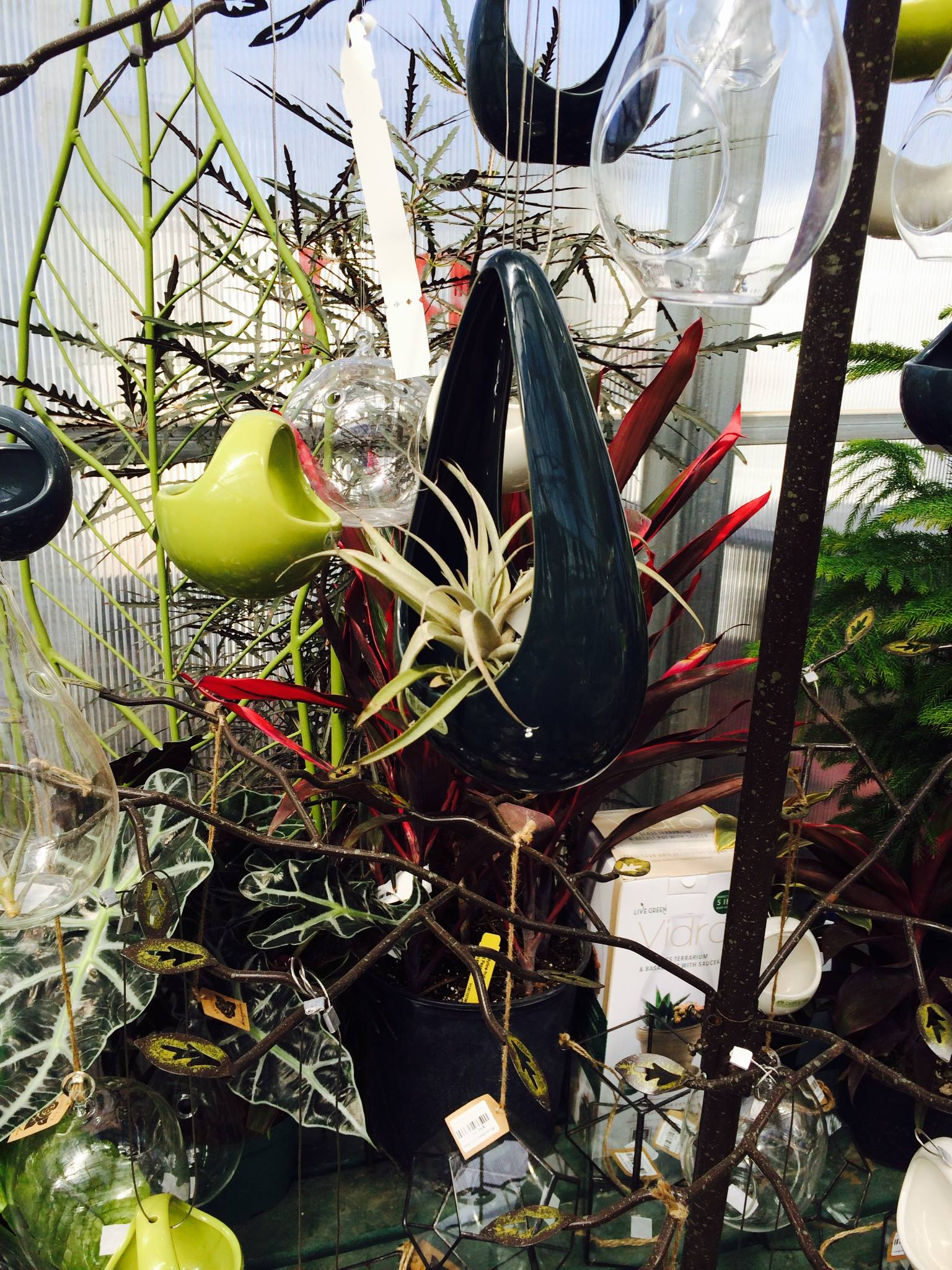 Air plants indoor gardening made easy winterberry gardens for Indoor gardening made easy