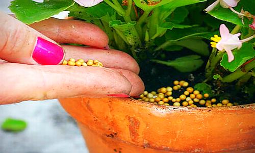 feeding-plants