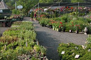 gardencenter-plantperks-3