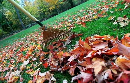 raking_leaves3