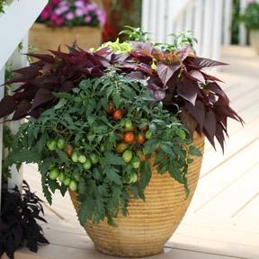 veggie and annuals container